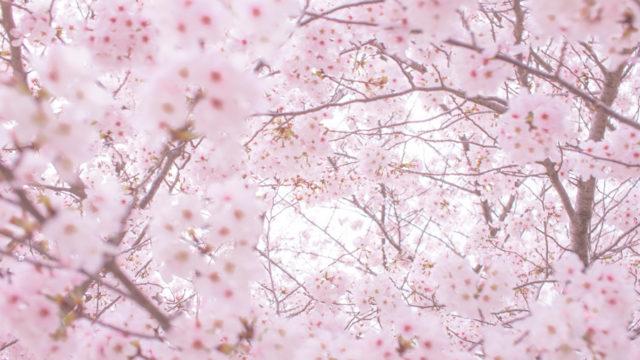 桜スイーツ 2020 セブン コンビニ